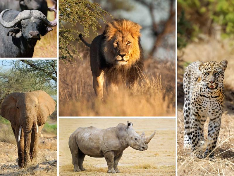 about the big five animals in africa